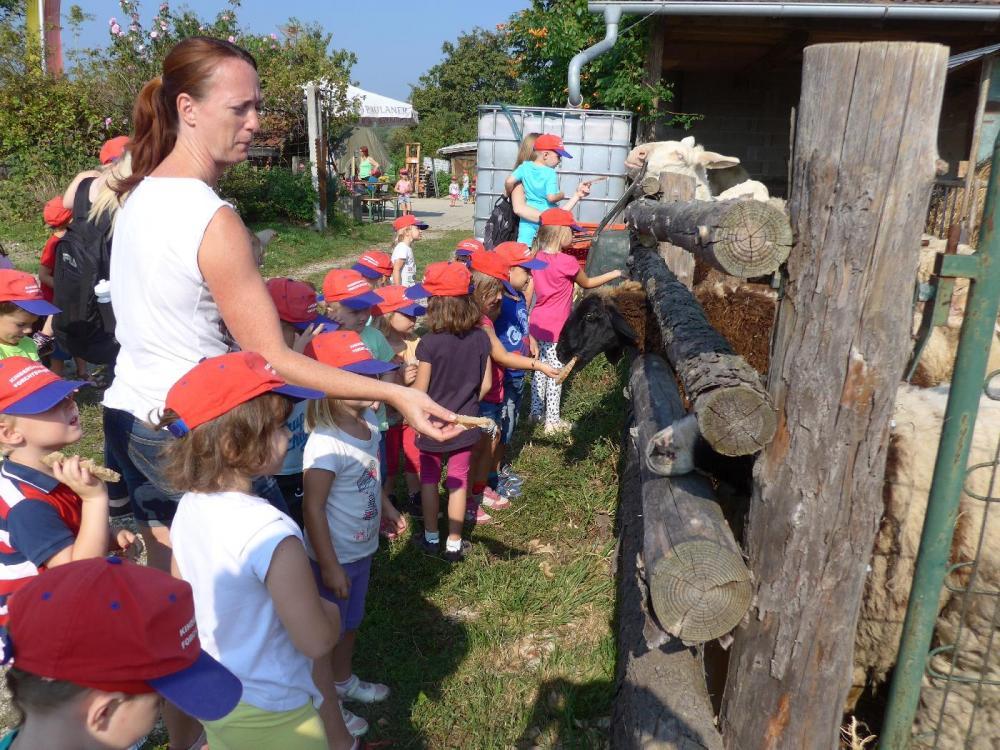 biobauernhof-kindergarten-forchtenstein